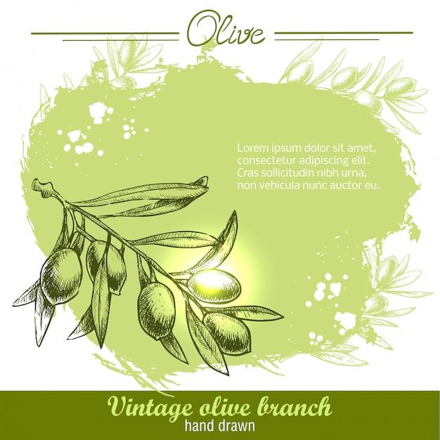 Illustrazione disegnata a mano del ramo d'ulivo sull'acquerello