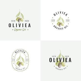 Collezione di logo vintage distintivo d'oliva disegnato a mano