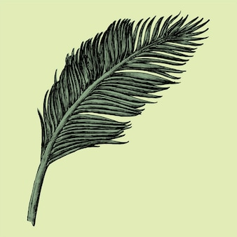 Foglia di palma disegnata a mano