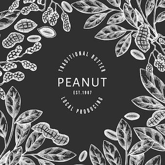 Modello di ramo e noccioli di arachidi disegnato a mano. illustrazione di alimenti biologici a bordo di gesso. retro illustrazione del dado. immagine botanica in stile inciso.