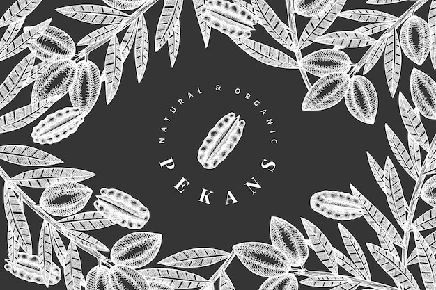 Disegnata a mano ramo di noci pecan e design di noccioli. illustrazione di alimenti biologici a bordo di gesso.