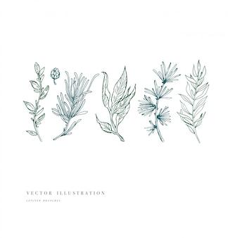 Pianta disegnata a mano e raccolta. set di fiori incisi vintage. illustrazione