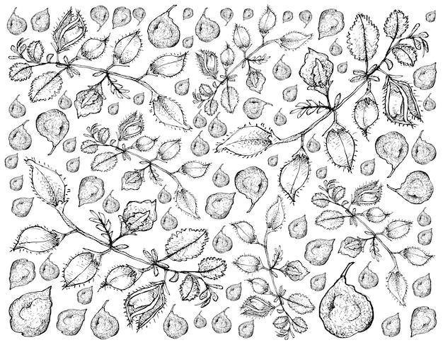Disegnato a mano di baccello di sfondo di piselli