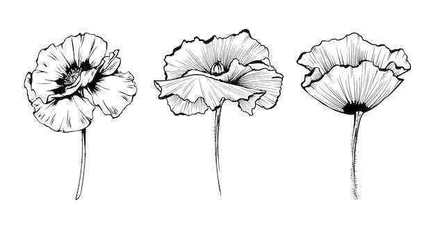 Fiori di papavero disegnati a mano