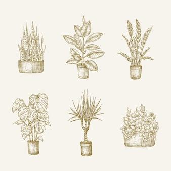 Fiori di piante d'appartamento in vaso disegnati a mano con schizzi di foglie impostati illustrazioni di doodle di giardinaggio domestico c...
