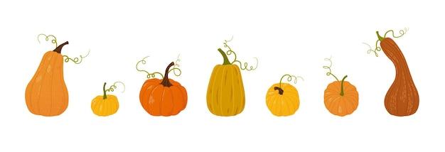 Zucche disegnate a mano raccogliere elementi di design di ringraziamento o di halloween vettore piatto isolato