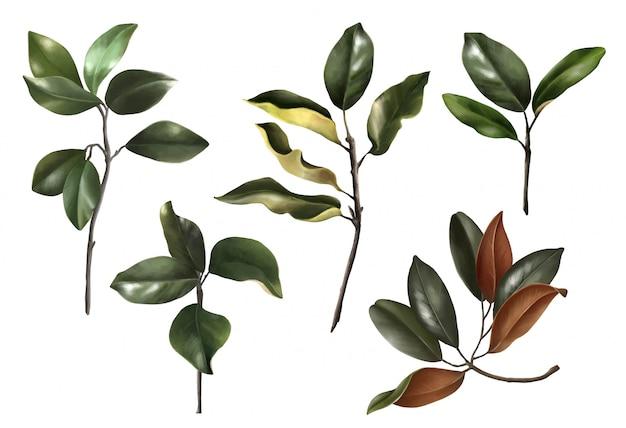 Insieme realistico disegnato a mano di foglie di magnolie botaniche