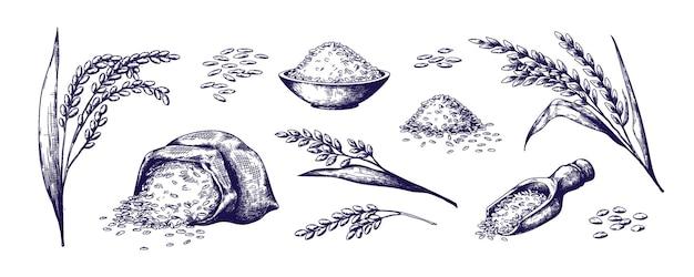 Riso disegnato a mano cereali biologici in sacchetto e porridge di riso in una ciotola schizzo doodle set di gelsomino selvatico