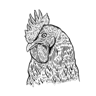 Illustrazione disegnata a mano del gallo. elemento di design per poster, carta, etichetta, segno, carta, banner. immagine