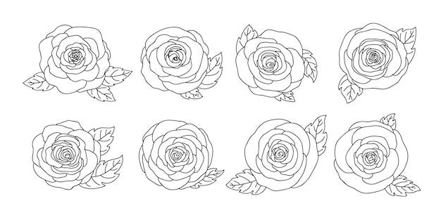 Collezione di fiori di rosa disegnati a mano