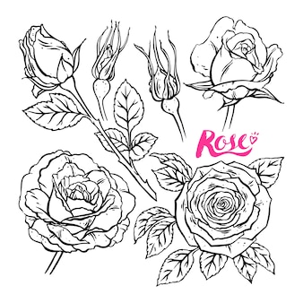 Collezione di rose disegnate a mano