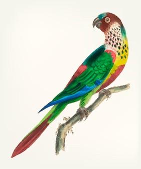 Disegnato a mano di pappagallo dal petto squamoso