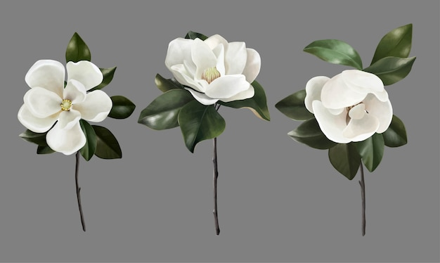 Insieme disegnato a mano di fiori botanici realistici magnolie