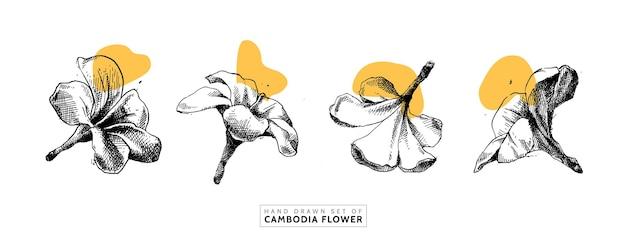 Insieme disegnato a mano del fiore della cambogia in stile vintage