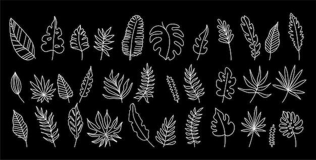 Insieme disegnato a mano di foglie tropicali in sagome.