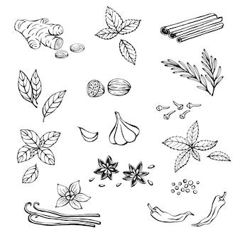 Insieme disegnato a mano con erbe e spezie. icone di cucina. illustrazione vettoriale.