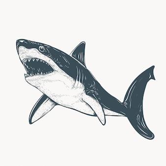 Illustrazione disegnata a mano dello squalo