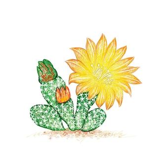 Schizzo disegnato a mano della pianta di cactus airampoa