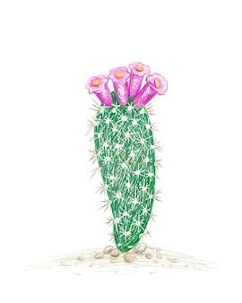 Schizzo disegnato a mano della pianta di cactus arrojadoa