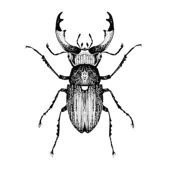 Schizzo disegnato a mano di scarabeo con le corna.