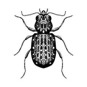 Schizzo disegnato a mano dello scarabeo.