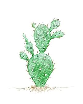Schizzo disegnato a mano della pianta di cactus brasiliopuntia