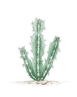 Schizzo disegnato a mano di cereus mill cactus