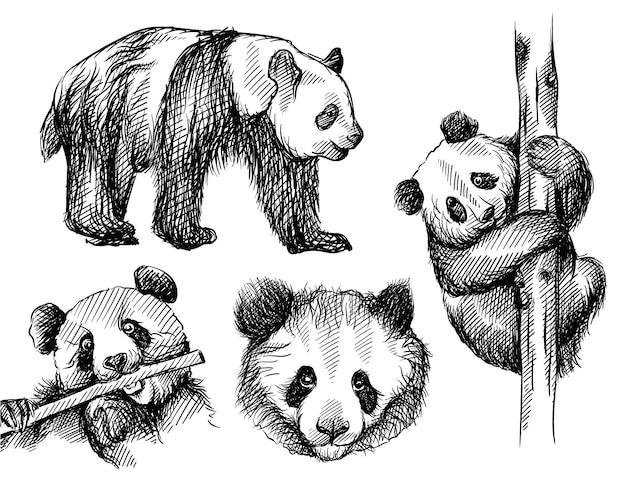 Insieme di schizzo disegnato a mano dell'orso panda su sfondo bianco.