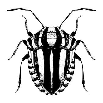Schizzo disegnato a mano di scarabeo a strisce.