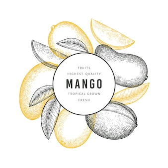 Mango stile schizzo disegnato a mano. illustrazione di frutta fresca.