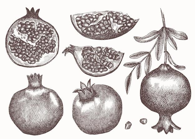 Insieme di melograni stile schizzo disegnato a mano. melograno con semi e foglie.