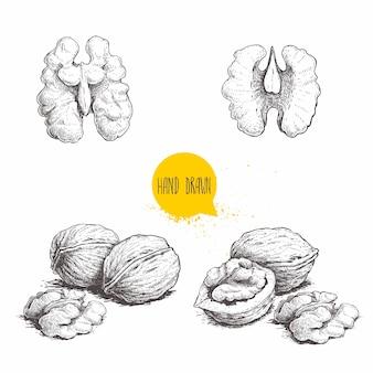 Set di noci stile schizzo disegnato a mano. singolo seme intero, metà e noce.