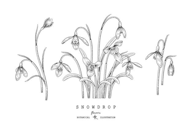 Fiore di bucaneve disegnato a mano decorativo set linea arte nera isolato su sfondi bianchi.