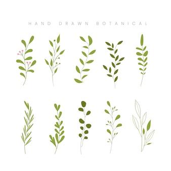 La foglia botanica della molla disegnata a mano lascia l'illustrazione floreale della pianta