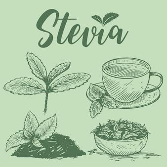 Piante di stevia disegnate a mano,