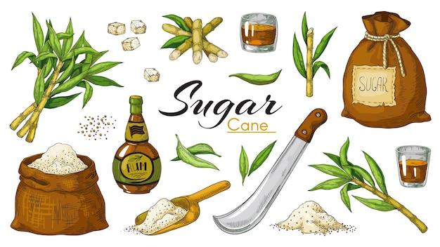 Illustrazione disegnata a mano della canna da zucchero e del rum