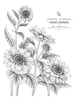 Set decorativo di fiori di girasole disegnati a mano linea arte nera isolato su sfondi bianchi.
