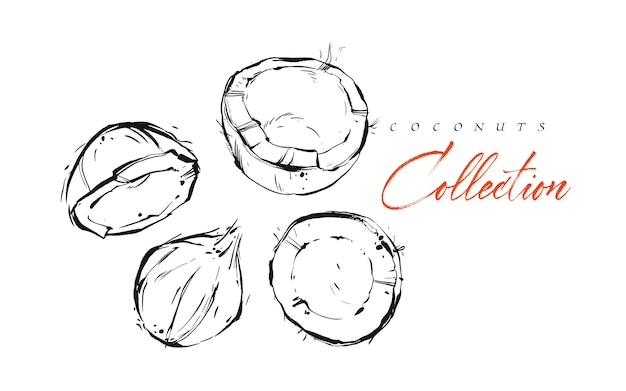 Insieme di illustrazioni di vettore disegnato a mano astratto esotico grafico inchiostro martellata frutti tropicali noci di cocco insieme schizzo disegno isolato su priorità bassa bianca. concetto di stile di vita sano.