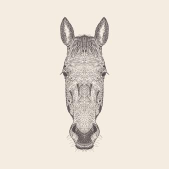 Vettore disegnato a mano dell'illustrazione della testa dell'asino.