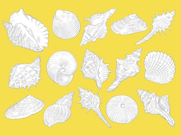 Illustrazione vettoriale disegnata a mano di conchiglie su sfondo giallo per colorare