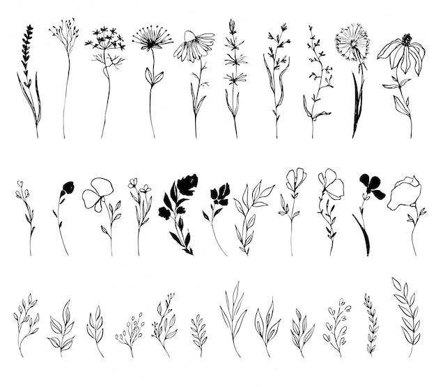 Insieme di vettore disegnato a mano di fiori di inchiostro, foglie e ramoscelli