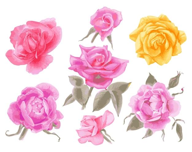 Vettore disegnato a mano dell'insieme dell'acquerello delle rose illustrazione dei fiori del giardino isolati su white