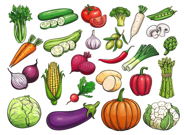 Set di icone di verdure disegnate a mano