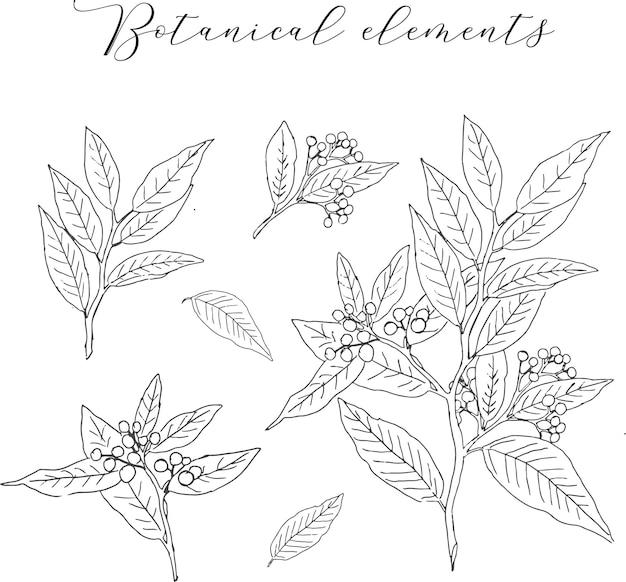 Elemento botanico vintage disegnato a mano
