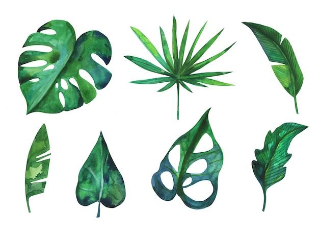 Collezione di foglie tropicali della foresta pluviale verde dell'acquerello disegnato a mano Vettore Premium