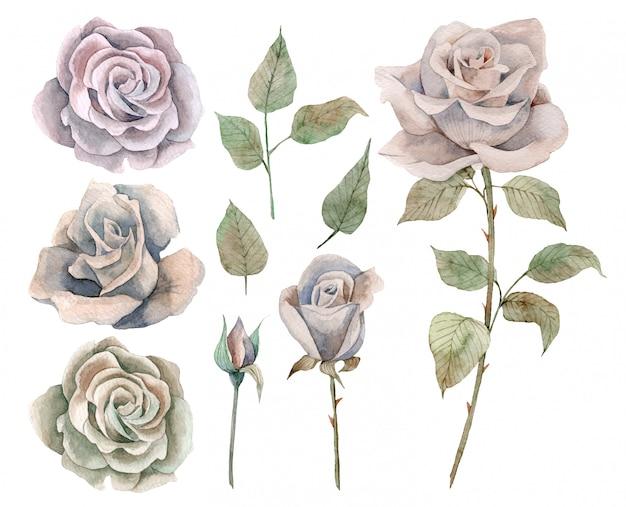 Insieme disegnato a mano dell'acquerello di rose e foglie d'epoca