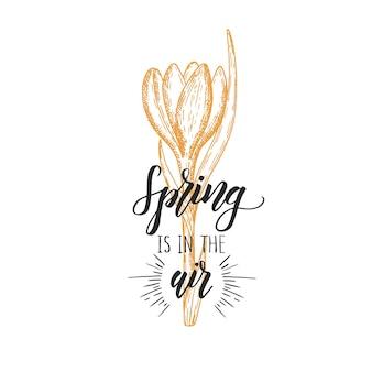Lettering fatto a mano - primavera nell'aria. croco disegnato a mano dell'annata. schizzo. fiori di primavera.