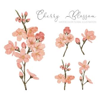 Stagione primaverile dell'acquerello dell'illustrazione del fiore del fiore di ciliegia dipinto a mano