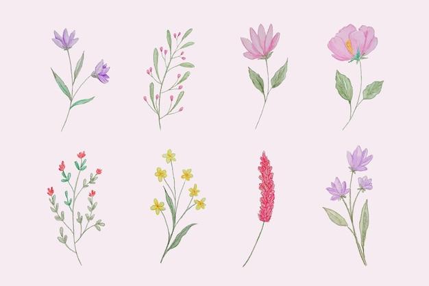 Collezione di fiori dipinti a mano
