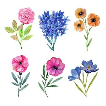 Collezione di fiori ad acquerelli dipinti a mano